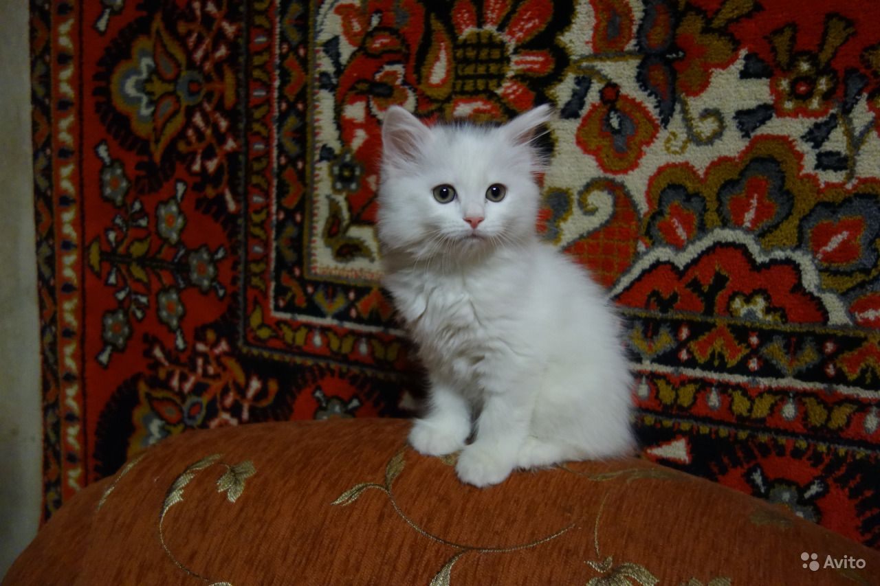 обитает болотах, белые пушистые котята сургут фото пятна, пузыри