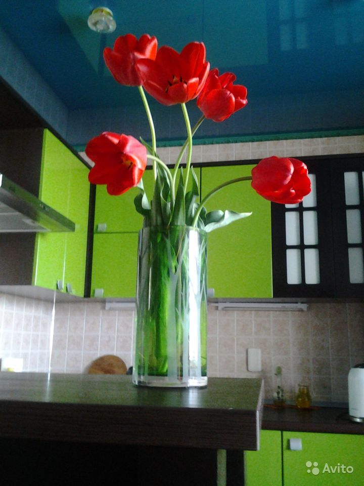 Продаю луковицы тюльпанов купить на Зозу.ру - фотография № 7
