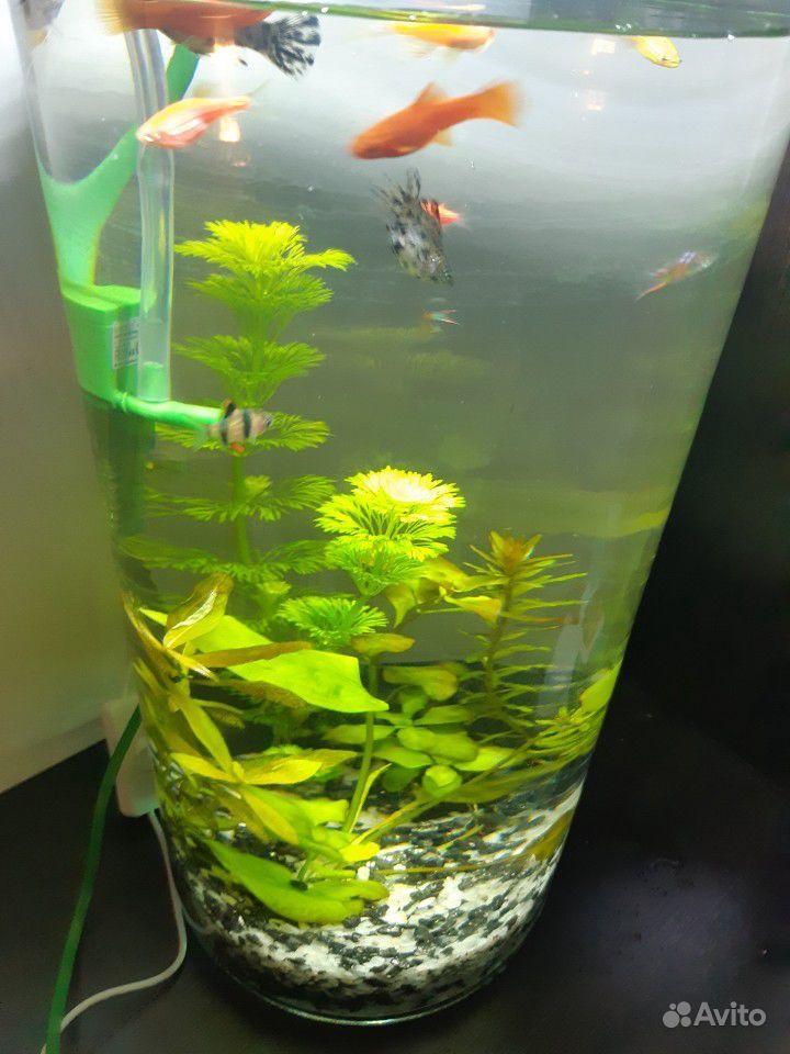Новый Готовый аквариум цилиндр купить на Зозу.ру - фотография № 4