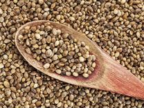 Семена конопли купить в самаре общества за легализацию марихуаны