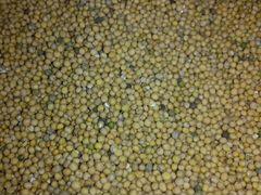 Семена горчицы нового урожая
