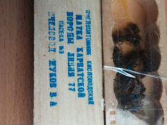 Пчеломаток карпаток