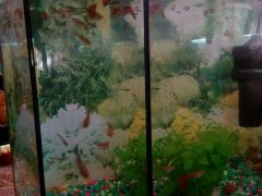 Аквариум,вместе со всем,рыбки,фильтр,камешки