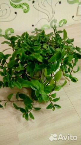 SmartWool авито купить комнатное растение ижевск мериноса действительно гипоаллергенная