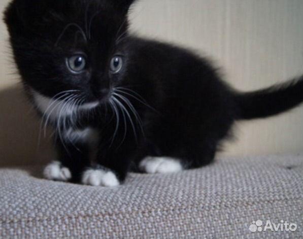 фото котят черных и белых