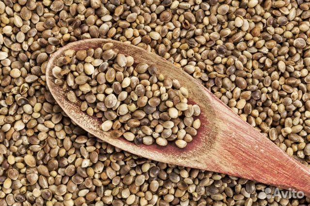 Конопляные семена самара 1 коробок марихуаны