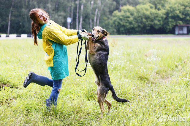 Отдам в добрые руки собаку Стенли купить на Зозу.ру - фотография № 7