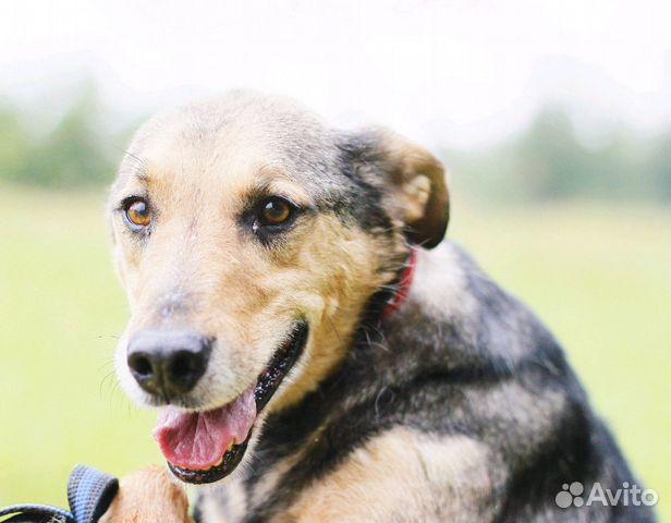 Отдам в добрые руки собаку Стенли купить на Зозу.ру - фотография № 3