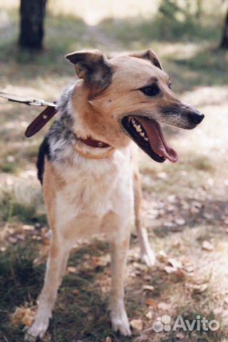 Молодая и добрая собака в дар купить на Зозу.ру - фотография № 6