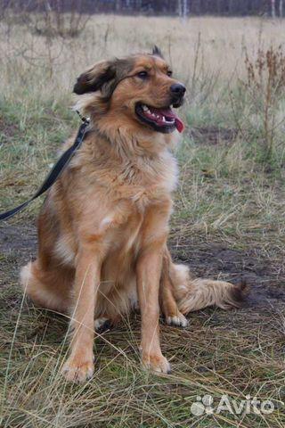 Собака в добрые руки купить на Зозу.ру - фотография № 8
