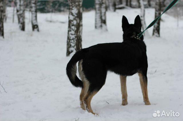Собака верный друг Макс в дар купить на Зозу.ру - фотография № 4