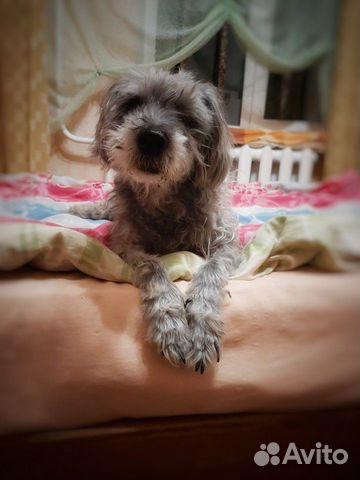 Собачка в добрые ручки купить на Зозу.ру - фотография № 4