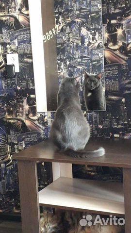 Котик ищет дом  89132414283 купить 2