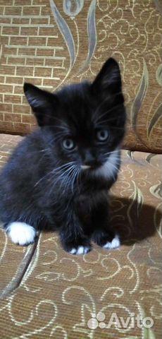 Кошка мышеловка отдам котят в добрые руки звоните  89628149299 купить 2