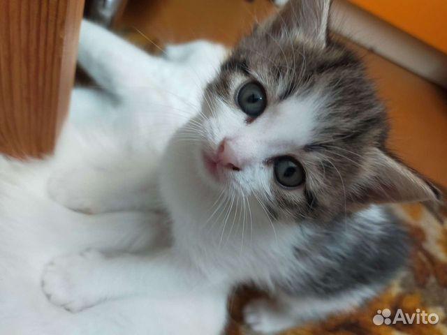 Kitty  89642177980 kaufen 2