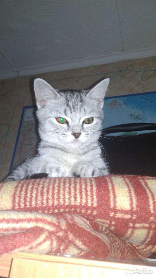 Кошка  89631183539 купить 1