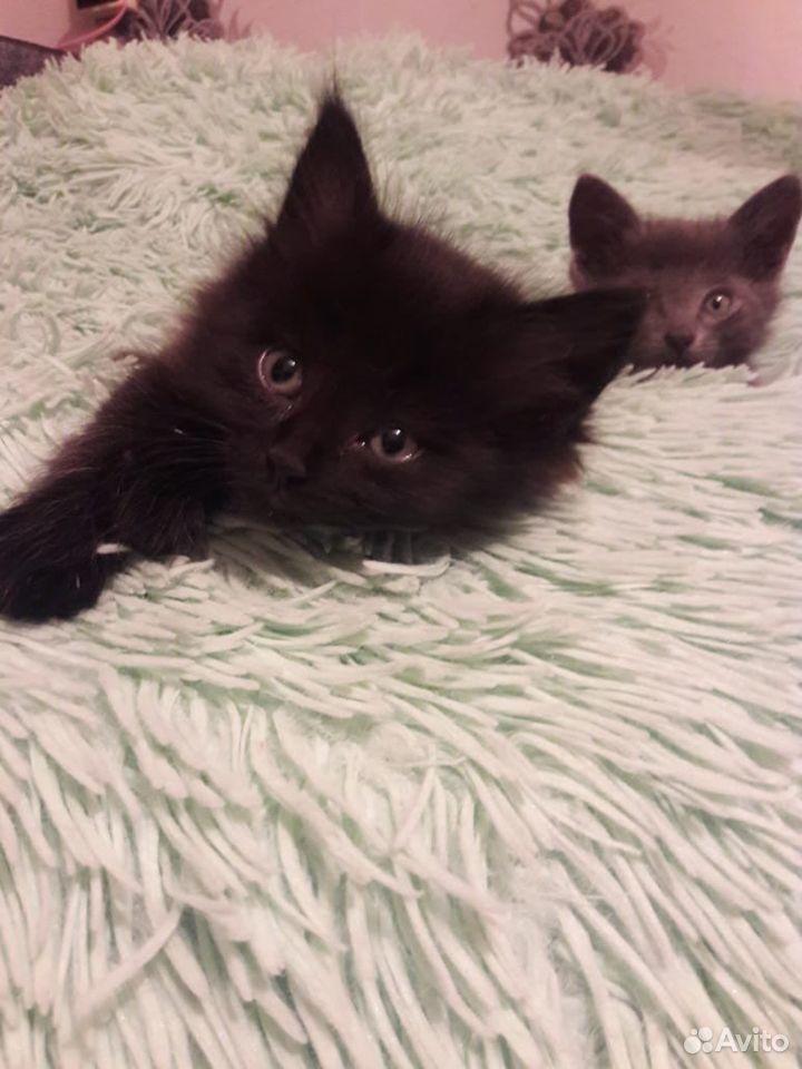 Кошка  89208680728 купить 2