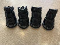 Ботинки лакированные для собак на меху