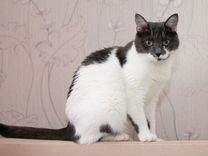 Юна - нежная, теплая, добрая кошка в поисках дома