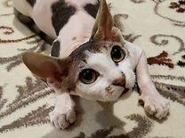 Ищем котика для случки