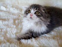 Предлагаю котёнка