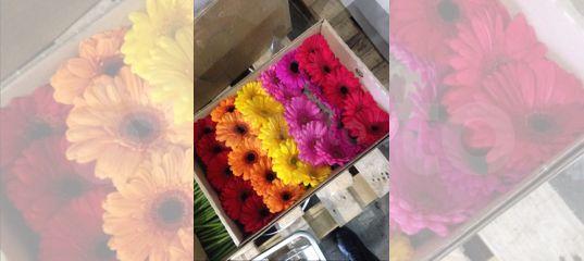 Башмачок, братск цветы мелкий опт минск