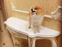 Шпиц вязка — Собаки в Геленджике