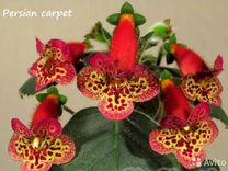 Колерия Persian carpet и другие