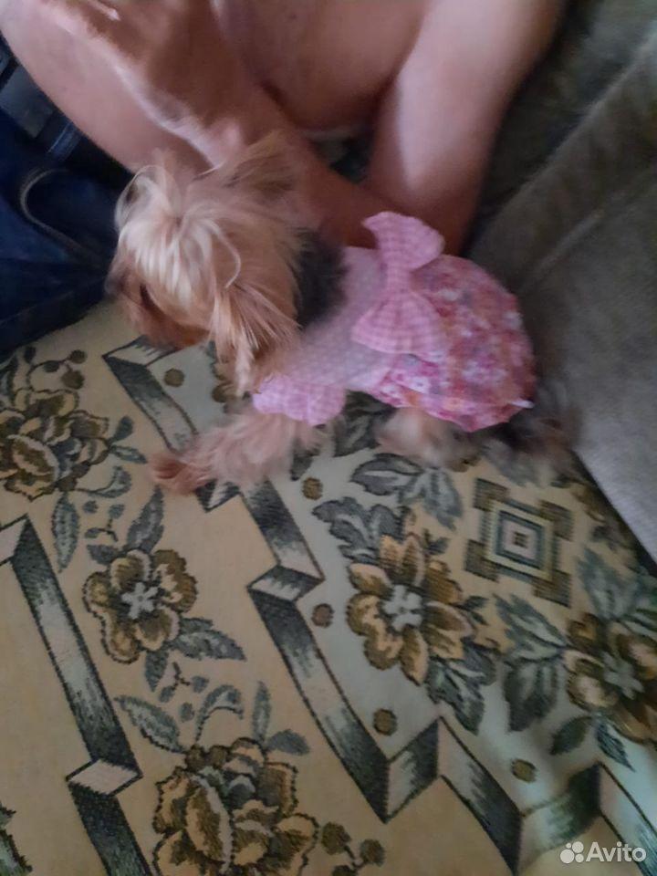 Платье для маленькой собаки размер s  89677666088 купить 5