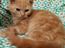 Котики Абрикосики