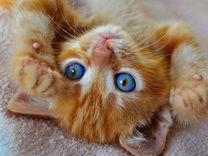 Хорошенький рыжий котёнок в дар