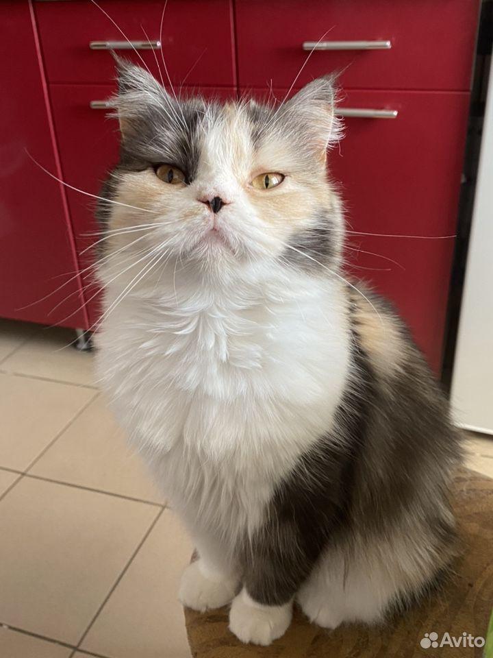 Кошка  89098900465 купить 2